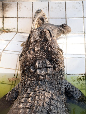 inoffensive: Crocodile disabilities Stock Photo