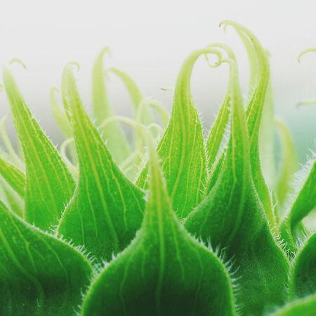 green leaf closeup photo