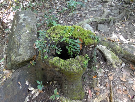 Green leaves with wood stump  photo