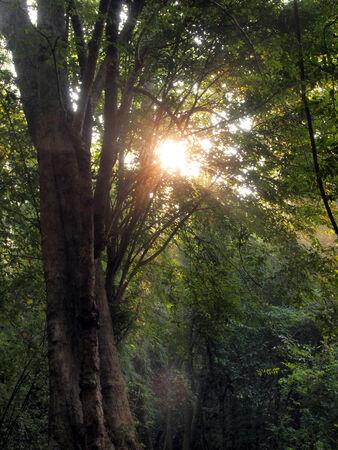 Enchanted Summer Morning Forrest photo