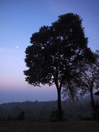 Silhouette Tree photo