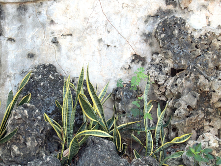 unaffected: plant grows in old wall