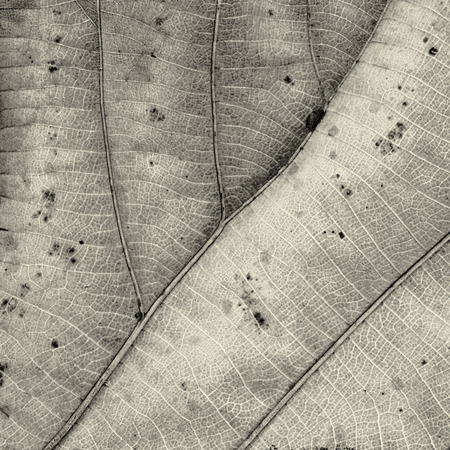 petiole: Patterns on the leaves shriveled