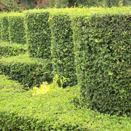 shrub: shrub fence
