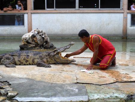 samutprakarn: Samutprakarn,Thailand - August 2, 2014: crocodile show at crocodile farm in Samutprakarn,Thailand. This exciting show is very famous among among tourist and Thai people
