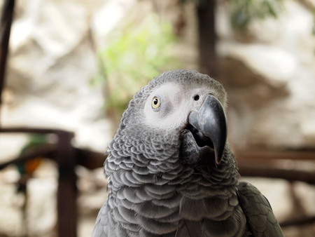 maccaw: Macaw parrot
