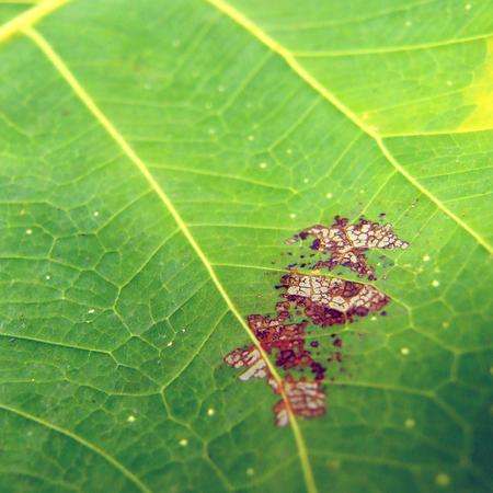 macro leaf: green leaf macro background