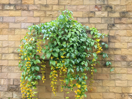 Flower pot with brick wall photo