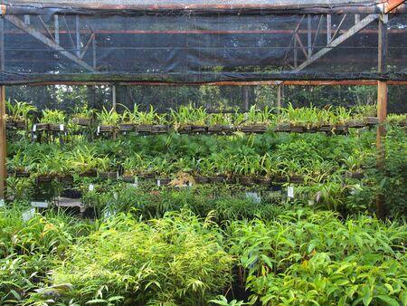 cotes d armor: a plant nursery in Thailand