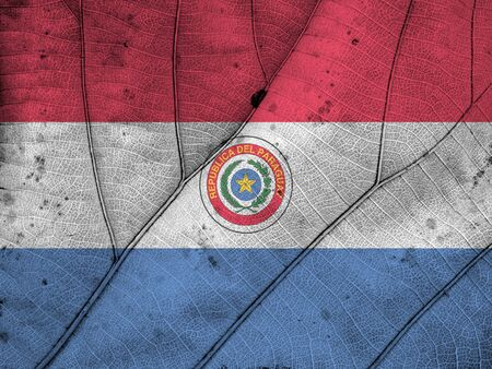 Paraguay flag: Paraguay hoja bandera textura Foto de archivo
