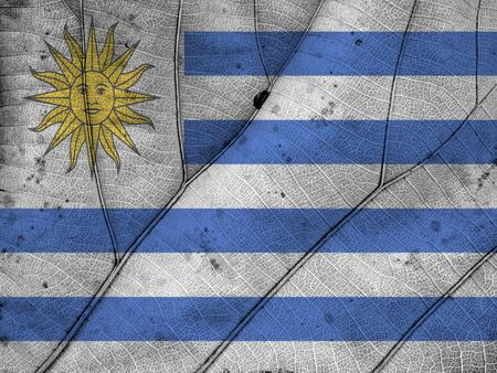 clime: Uruguay flag leaf texture Stock Photo