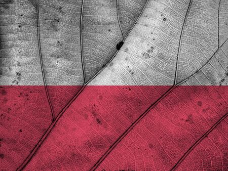 poland flag: Poland flag leaf texture Stock Photo