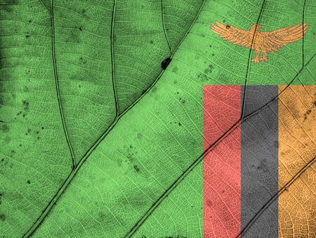 clime: Zambia flag leaf texture