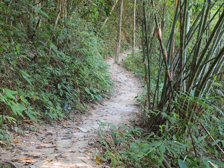 road and path through: Bamboo Jungle Forest