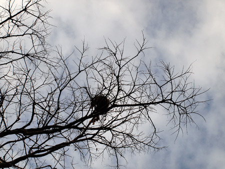 leafless: Leafless trees with branches