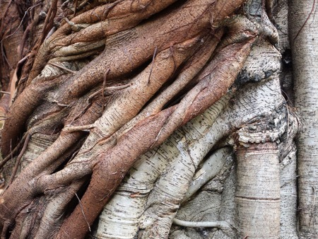 downtime: trunk of the tree
