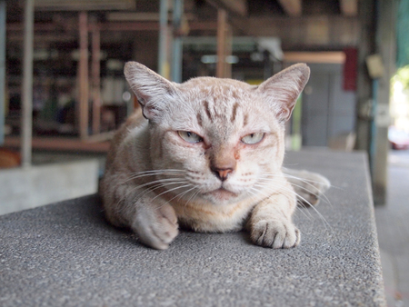 dwell house: Angry cat with unhappy Stock Photo