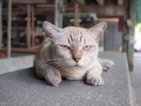 Boze kat met ongelukkig