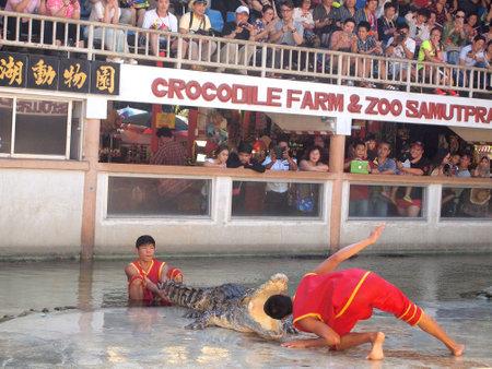 samutprakarn: Samutprakarn,Thailand - April 18, 2015 : crocodile show at crocodile farm .This exciting show is very famous among tourist and Thai people