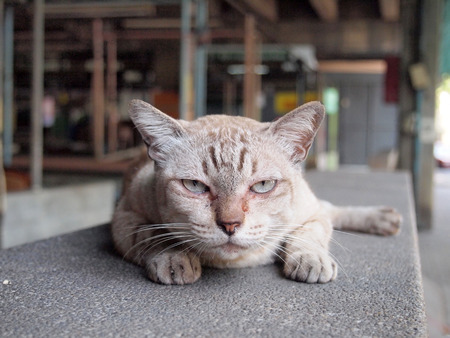 Angry cat with unhappy Standard-Bild