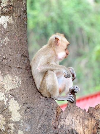 Thinking monkey closeup on tree Stock Photo