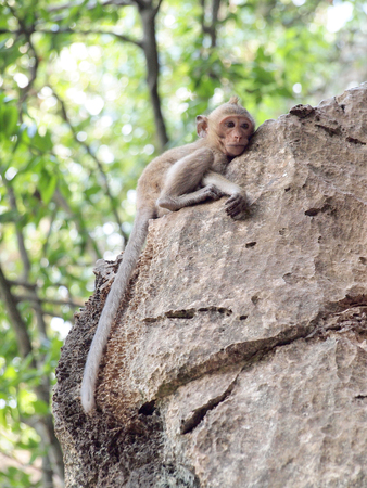 marmoset: monkey climb on stone Stock Photo