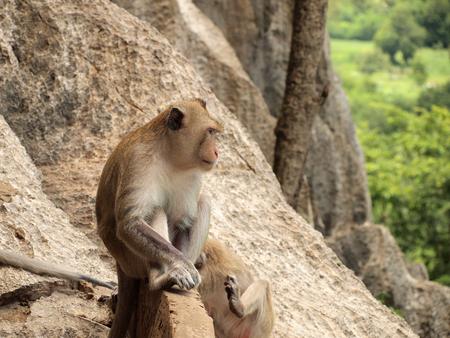 monkey is sitting on the stone