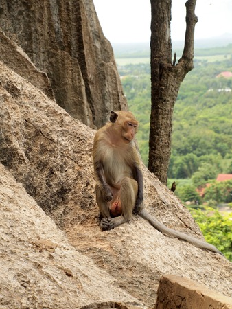 monkey is sitting on the stone