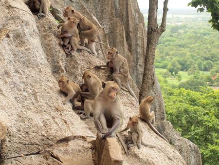 monkey family is sitting on the mountain Stock Photo