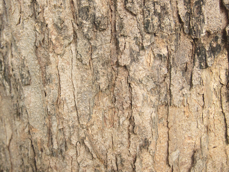 Tree bark texture Stock Photo - 86041192