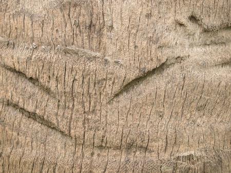 Tree bark texture Stock Photo - 86041207