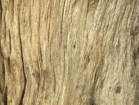 Tree bark texture Stock Photo - 86041321
