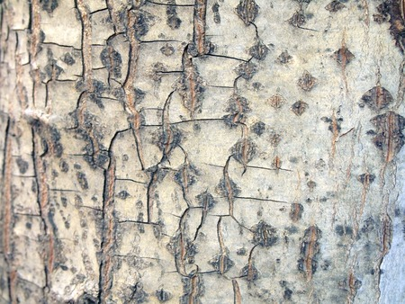 Tree bark texture Stock Photo - 85901025