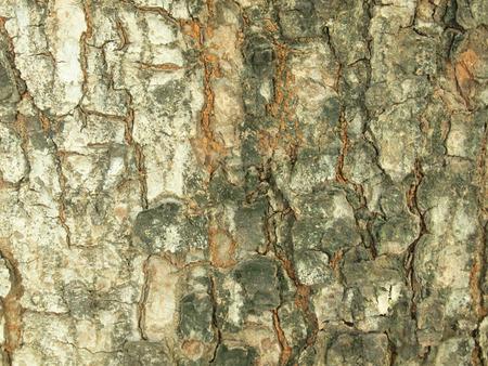 Tree bark texture Stock Photo - 86169635
