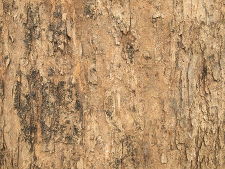 Tree bark texture Stock Photo - 86261491