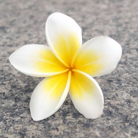 Tropical flower frangipani Stock Photo