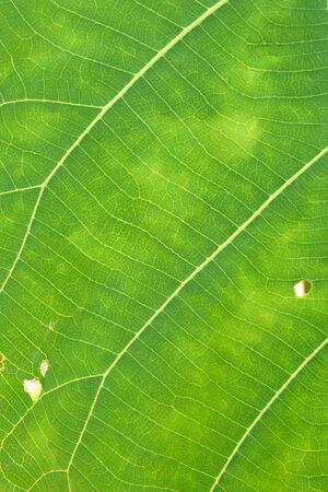 Gros plan de la texture des feuilles vertes