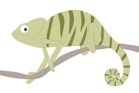 green chameleon with white backround 写真素材 - 149547972