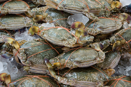 blue swimmer crab: Blues wimming crab with ice in thai market