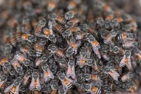 Bee Gebäude Nest und Waben auf rostigen Gitter Stahl