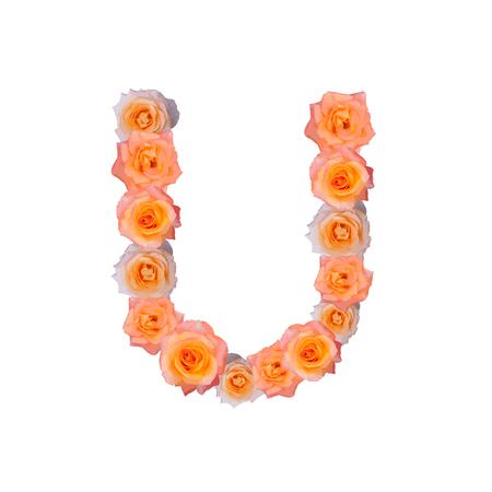 The letter U, in the Alphabet bloom roses illustration set old rose pink color isolated on white background, vector eps10 Illustration