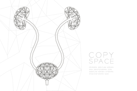 Kidney and bladder shape wireframe polygon silver frame structure, Medical Science Organ concept design illustration isolated on black gradient background with copy space, vector eps 10