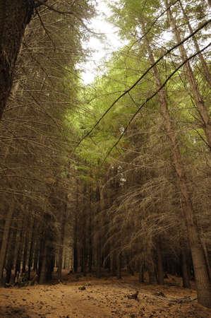 bariloche: Forest at Bariloche