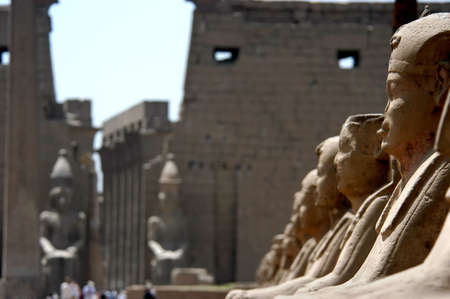 Sphinxes at the temple of Luxor and Karnak, Nile river, Egypt                                 photo