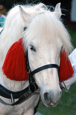 ethno: Close-up of a horse decorated for ethno festival, suitable to use it as ethno motives and festivals
