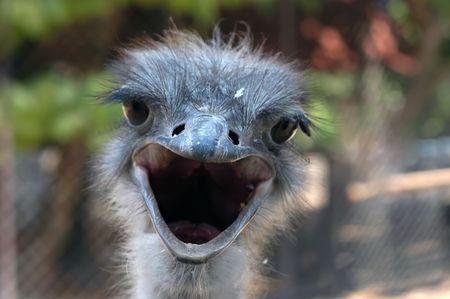 unify: Ostrich, close-up image, focus on beak