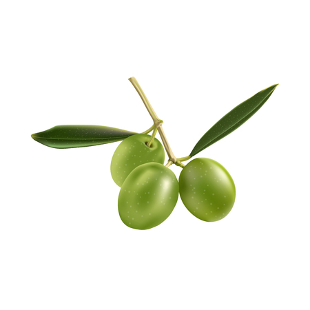 Green Olives with  Branch Leaves Isolated on White Background Ilustração