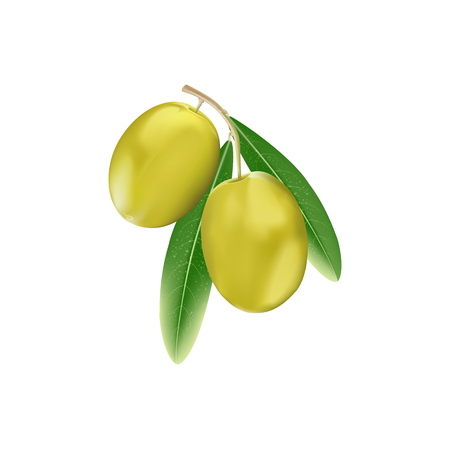 Yellow Olives with  Branch Leaves Isolated on White Background