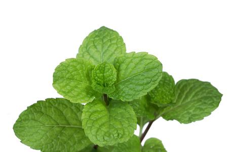 fresh mint leaves isolated on white background. close up Stock Photo