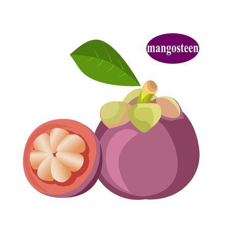 Mangosteen isolated on white background.